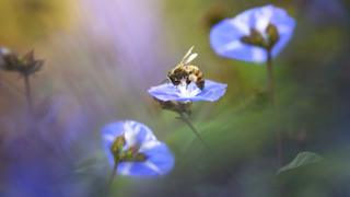 Morning visitor - Pei Ling Lee / www.igpoty.com (category: New Shoots)