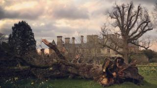 Tree down at Beaulieu Palace House