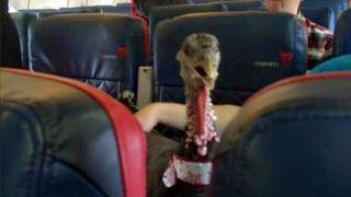"""biggestlittlepickle uploaded on imgur: My neighbour is a flight attendant. He just posted this photo of someone's """"therapy pet,"""" on his flight."""