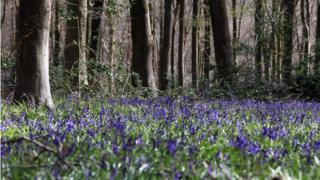 MPs are calling for greater protection for ancient woodland
