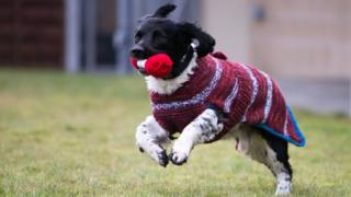 Dog in knitted jumper