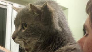 Brian the three-eared cat