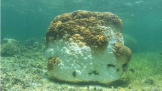 Coral bleaching at the Dongsha Atoll