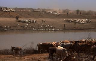 Watering hole in Marsabit, Kenya