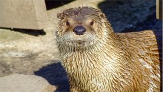 Logan the river otter