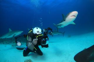 Sharks off The Bahamas