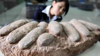 A worker inspects dinosaur eggs on display at a natural science museum in Beijing (20 April 2010)