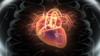 heart inside the chest