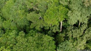 Forest canopy Mato Grosso