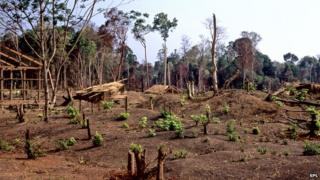 Cambodia deforestation