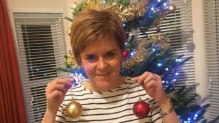 Sturgeon tree