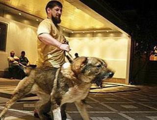 Ramzan Kadyrov with his dog Tarzan