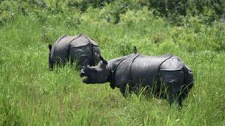 Rhino in the park