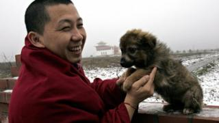 A monk plays with a dog