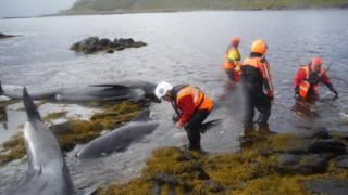 Whales rescue effort