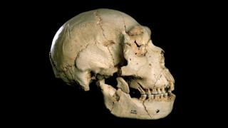 Cranium 5 from Sima de los Huesos