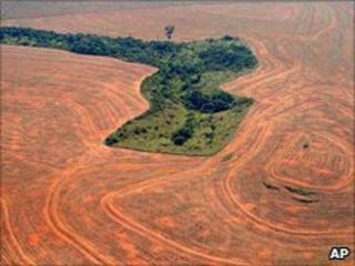 Deforested area of land (Image: AP)