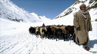 Himalayan herdsman on glacier