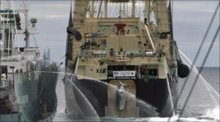 Japanese boat hauls in minke whale (file photo)