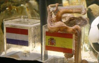Paul the octopus chooses Spain to win the World Cup on 9 July, 2010