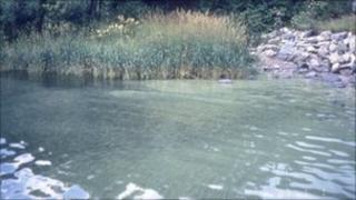 The blue-green algal bloom on Llyn Coron