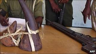 Recovered poached black rhino horns displayed in Kenya (Archive photo)