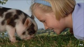 Young girl with pet pig