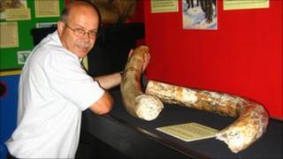 Tim Batty, curator of the Dinosaur Museum, with the tusks