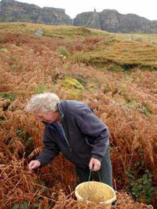 Eddie Scott harvesting bluebell seeds