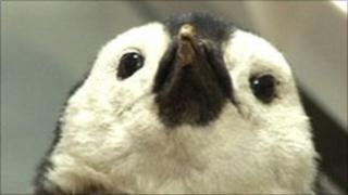 Penguin collected from Antarctic mission