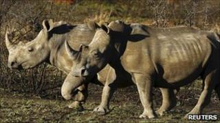 Rhinos in a game park in South Africa