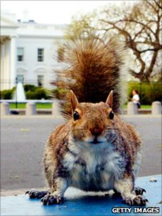 Squirrel in front of the White House