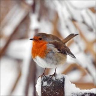 A robin on Hampstead Heath, London