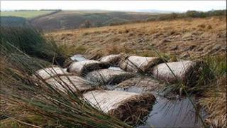 Exmoor peat bogs conservation