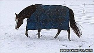Horse wearing rug in snowy field