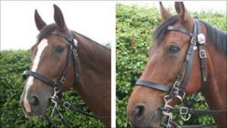 Police horses Bella and Biscuit before the attack