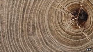 Tree growth rings (Image: Science Photo Library)
