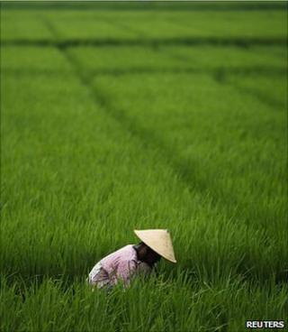 A woman working in a paddy field (Image: Reuters)