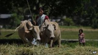 An Indian farmer in Assam, 26 May 2011