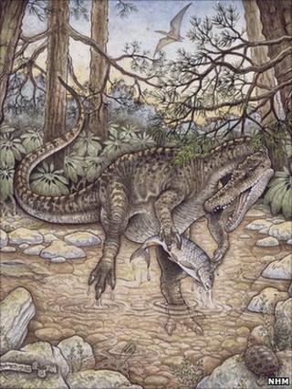 Baryonyx walkeri (NHM)