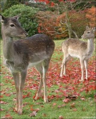 Young deer rescued by WRAS