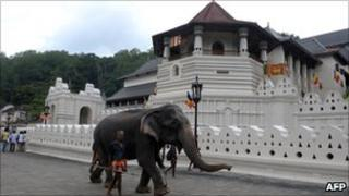 An elephant walks past a temple in the Sri Lankan city of Kandy, some 116kms from Colombo, on 8 August 2011