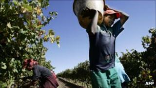 South African vineyard workers (file photo)