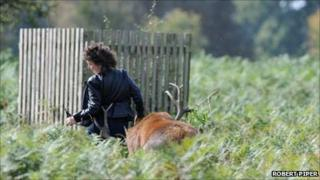 Photo of stag attack from from Robert Piper