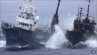 Anti-whaling group Sea Shepherd's ship the Bob Barker( right) and the Japanese whaling ship No. 3 Yushin Maru collide in the waters of Antarctica in Feb 2010