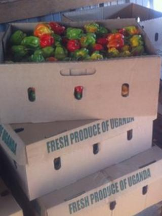 peppers in a box labelled Fresh produce of Uganda