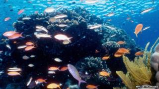 Colourful scene from The Great Barrier Reef
