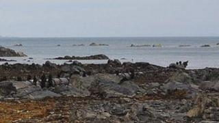 Guernsey's sewage outfall pipe