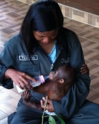 Rosa cares for baby orangutan Elaine at the Samboja Lestari sanctuary in East Kalimantan.