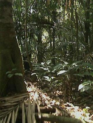Rainforest (Image: BBC)